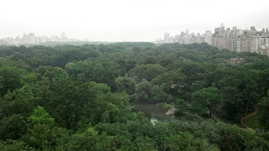 View of Central Park from Dr. Farrington's office