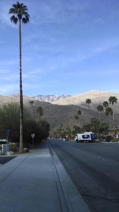 Palm tree, Palm Springs, California