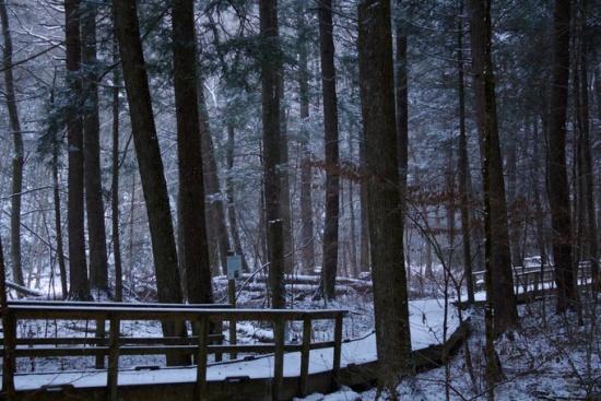 Snowy forest, Silver Thread Falls