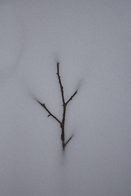 Twig in snow
