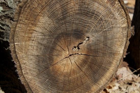 Felled log