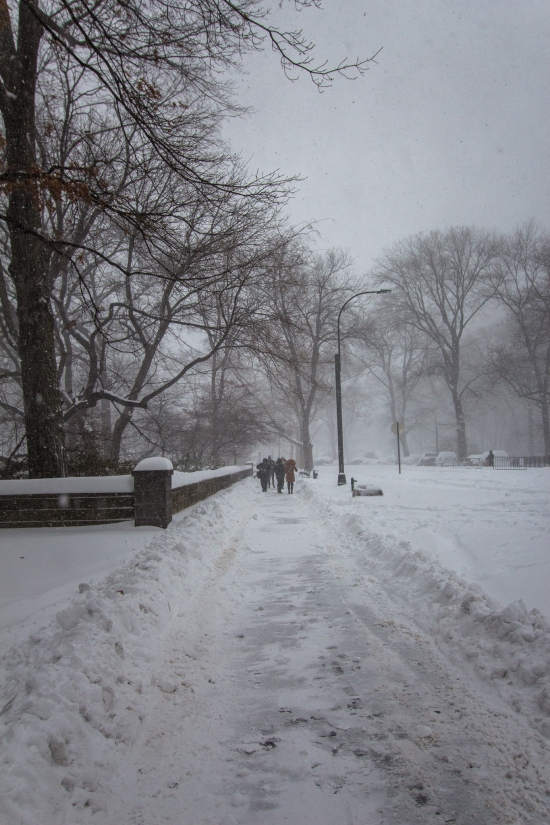 Central Park, Winter Storm Jonas